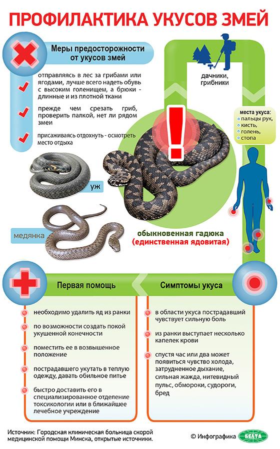 Профилактика и меры предосторожности от укусов змеи